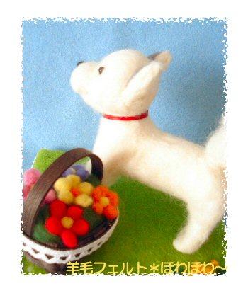 北海道犬くん3