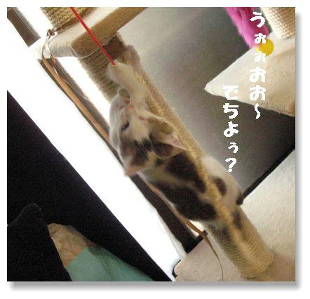 でも、子猫の成長って早いなぁ・・・(´・x・`)シュン