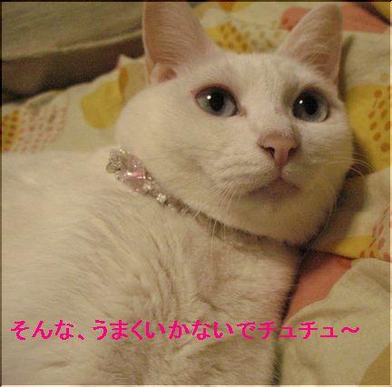 梅子は成長期なのでバレバレ(^-^;)