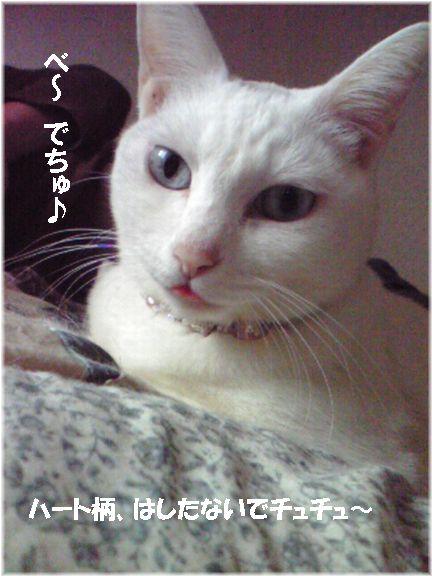 ちょい、ベロが出てるのが(・∀・)イイ!!