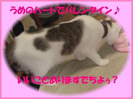 やっぱり、バレンタインらしくハート柄梅子部長出勤!!
