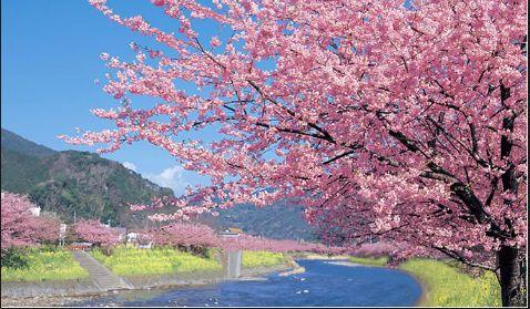 桜ってやっぱり華やか!